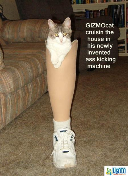 some-cats-just-get-into-anything-3b8.jpg